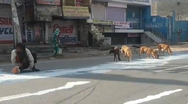 Φτώχεια και ανέχεια εν μέσω κορονοϊού: Πίνει χυμένο γάλα στην άσφαλτο δίπλα σε σκυλιά